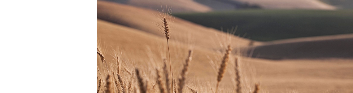 Harvest begins